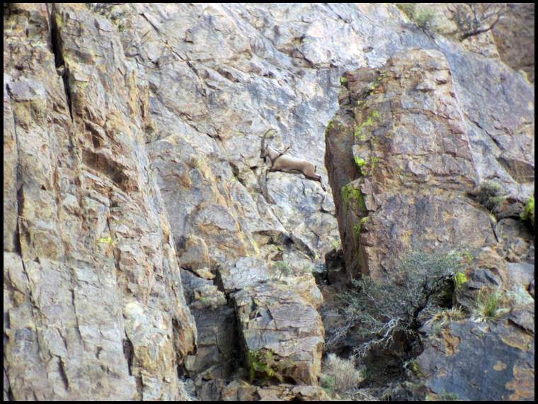 New mexico persian ibex hunts new mexico big game hunting for New mexico fishing license cost